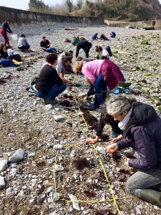 formation-au-programme-plages-vivantes--protocole-alamer
