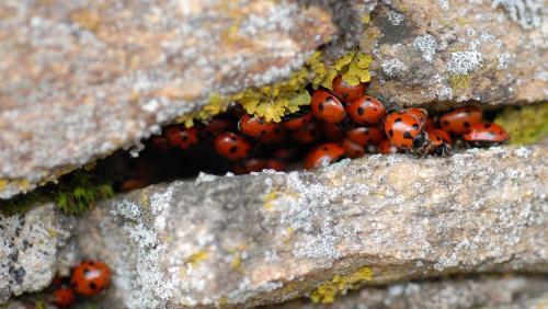 pourquoi_les_insectes_disparaissent_ils_en_hiver_