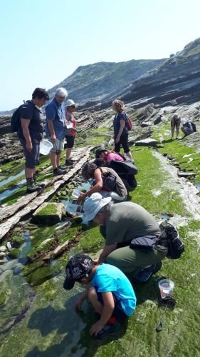 dans-les-rochers-a-maree-basse-a-urrugne-aux-viviers-basques-le-24-juin-2020