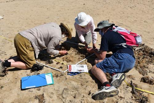 les-observateurs-du-littoral--une-initiation-a-letude-des-algues-de-la-laisse-de-mer