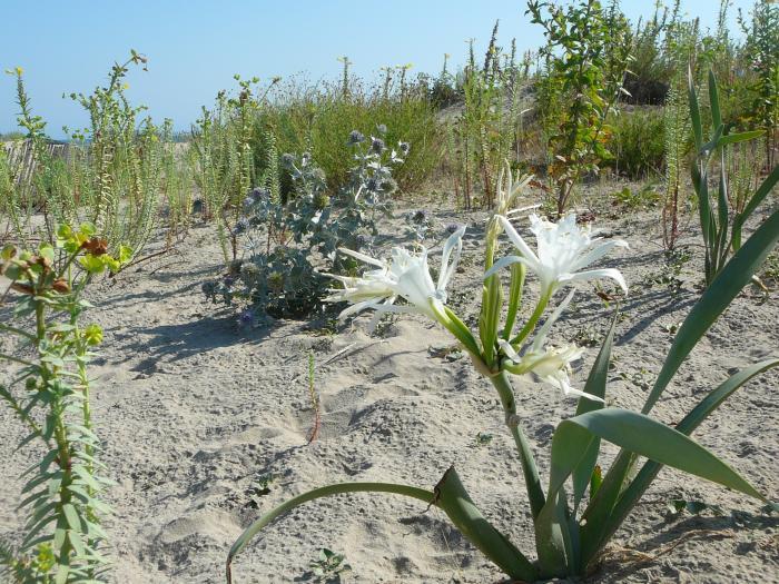 que-se-passe-t-il-sur-les-dunes-de-sokoburu-au-printemps-?