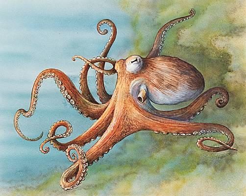 la-pieuvre-sous-toutes-ses-formes
