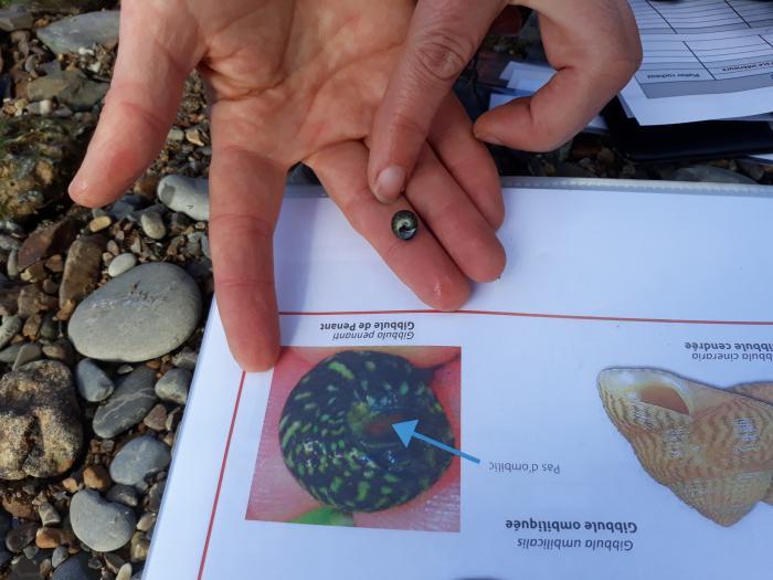 biolit--les-observateurs-du-littoral