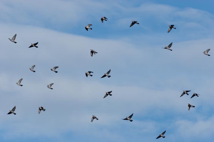 observer_les_oiseaux_migrateurs_sur_la_corniche_basque_