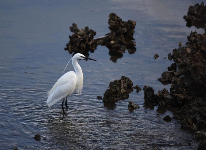wetland-:-comptage-international-participatif-des-oiseaux-deau-de-la-baie-de-txingudi