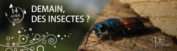 demain_des_insectes_
