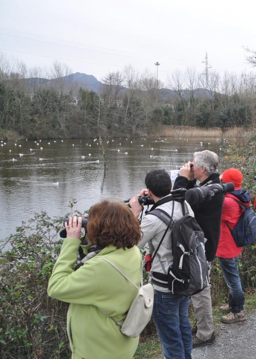 ornithologie-transfrontaliere-sur-la-baie-de-txingudi.