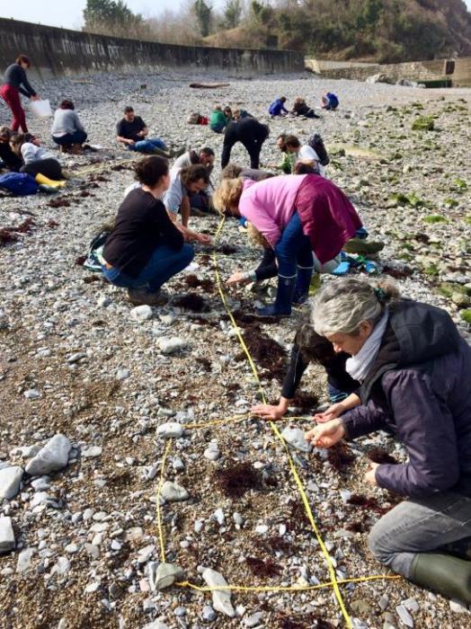 les-observateurs-du-littoral-a-hendaye-plage.