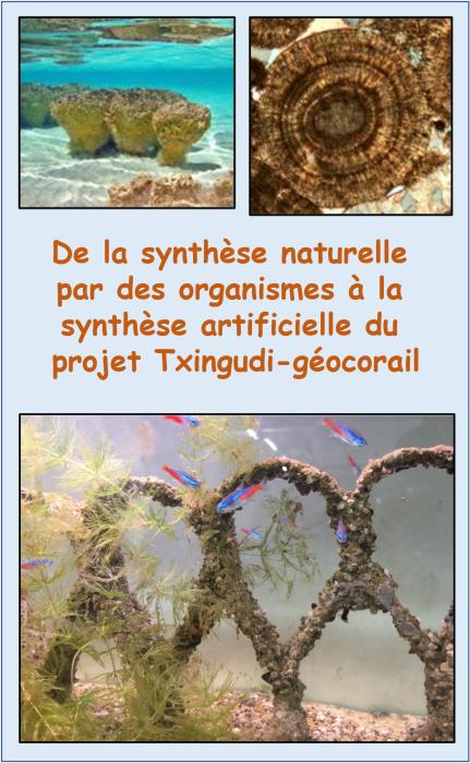 de-la-synthese-naturelle-des-roches-par-des-organismes-vivants-a-la-synthese-artificielle-du-projet-geocorail-dans-la-baie-de-txingudi