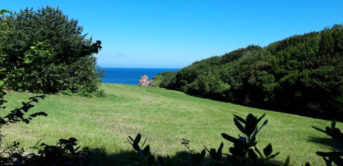 flore-des-landes-littorales-au-domaine-dabbadia