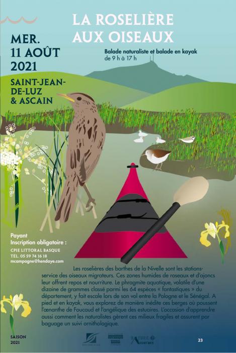 rdv-nature-du-64-la-roseliere-aux-oiseaux