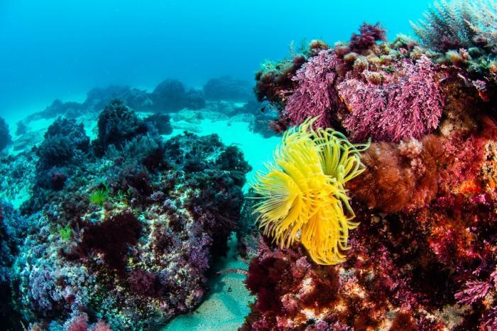decouverte-de-la-biodiversite-marine-de-la-cote-basque--semaine-hendayaise-du-developpement-durable